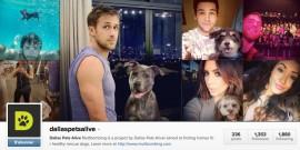 Dallas Pets Alive - Muttbombing Instagram - Fevrier 2014