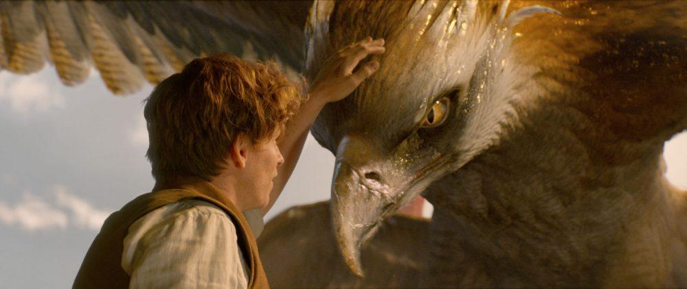 les-animaux-fantastiques-norbert-eddie-redmayne-oiseau-tonnerre